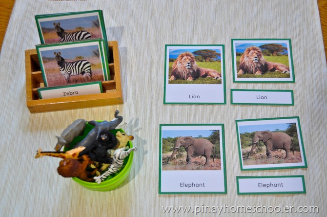 Africa Animals 3 Part Cards