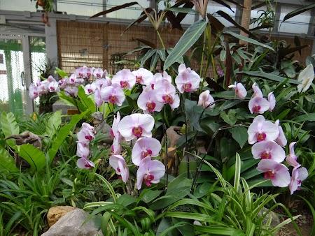 Anul Nou Chinezesc: Gradina de orhidee