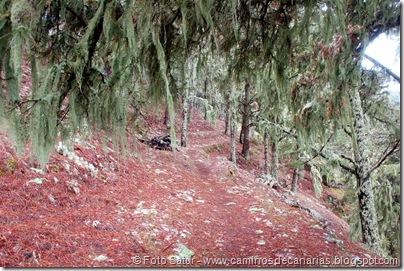 6870 Barranco Andén-Cueva Corcho(cueva Corcho)