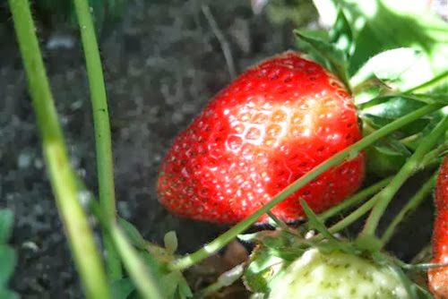 20090602 (Small)