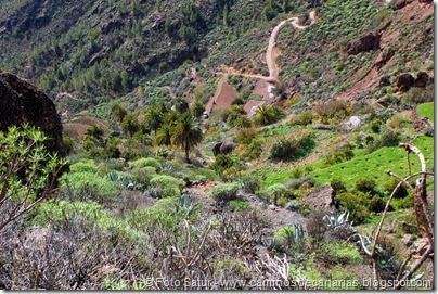 7036 Cruz Tejeda-Artenara-Guardaya(Los Manantiales)