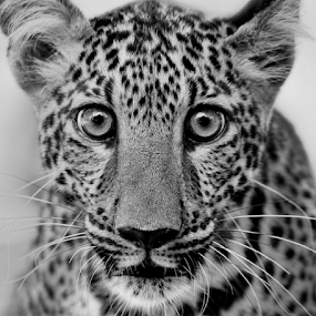 by Charliemagne Unggay - Black & White Animals (  )