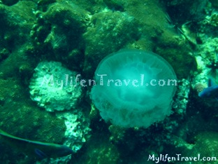 Koh Lipe Diving 53