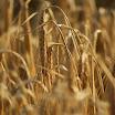 Harvest_Time_AnthonyGroome.jpg