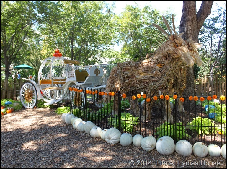 Dallas Arboretum - pumpkin festival-Cinderella's carriage