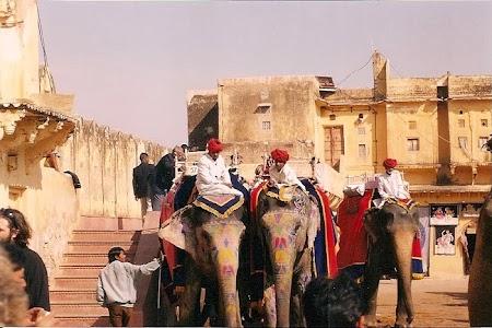 Jaipur elefanti.jpg