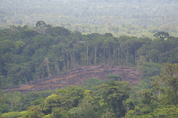 Déforestation près de Cacao (Guyane). 23 novembre 2011. Photo : J.-M. Gayman