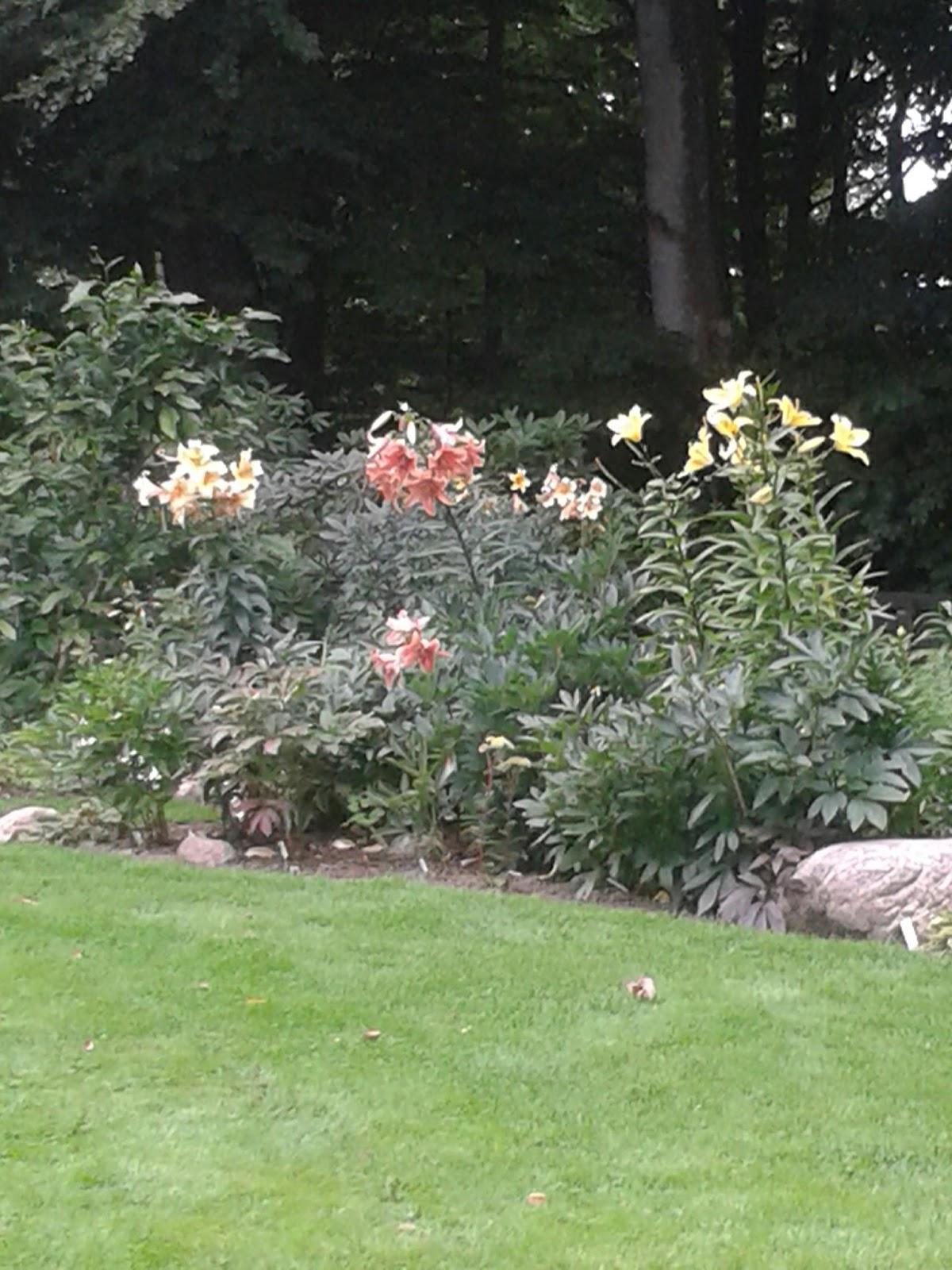 liljer i haven