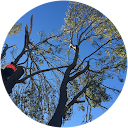 Ben Hastings Tree Service