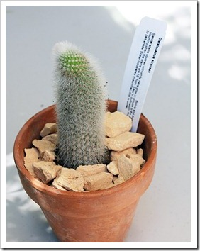 120704_Cleistocactus-straussii_05