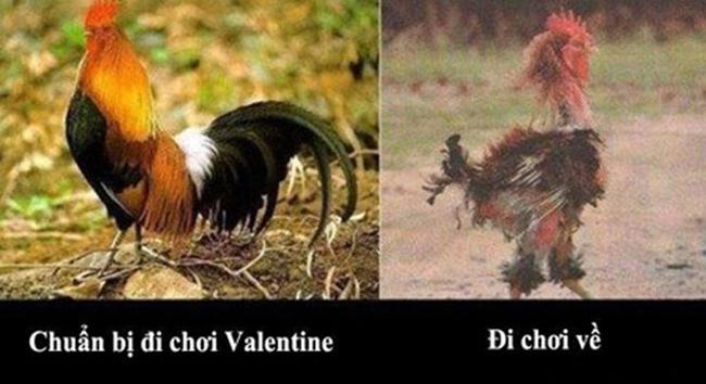 STT ảnh chế Valentine