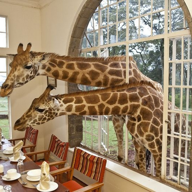 Spend a Night With Giraffes at The Giraffe Manor in Nairobi