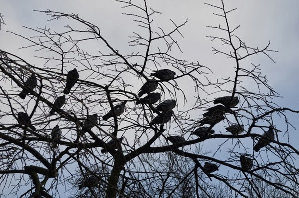 birds-in-a-tree