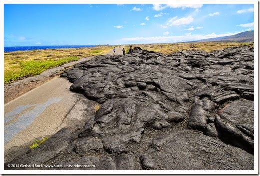 140724_HawaiiVolcanoesNP_0113