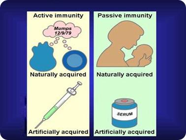 8. 11. 3 types of immunity --passive v active youtube.