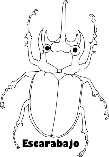 Escarabajos Dibujos Para Colorear