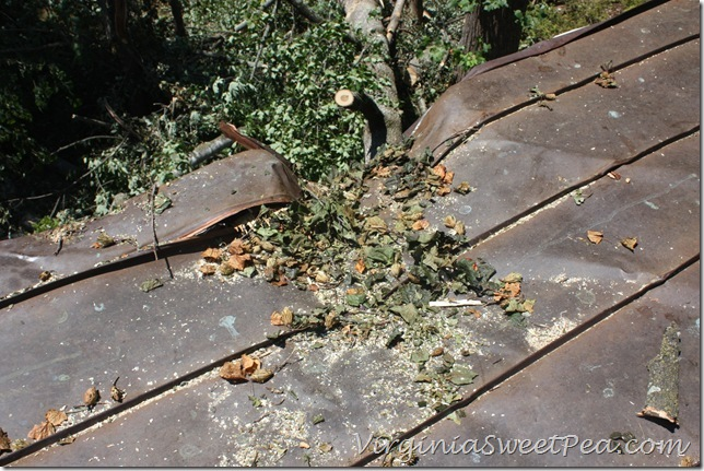 Roof Damage5