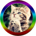 Kitty Kittens icon
