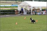 Hunde-Frisbee