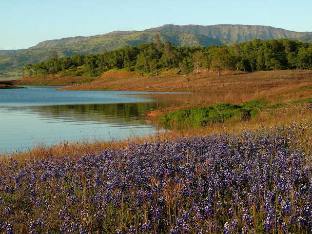 8 Great Wine Country Hikes to Do on your Next Trip to Napa Valley