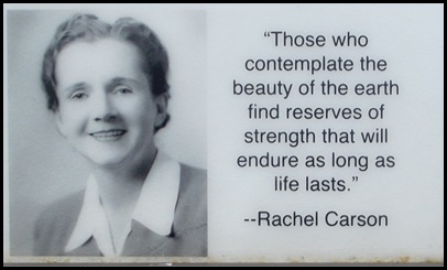 Rachel Carson and Wells Estuary 027A
