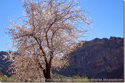7441 La Goleta-La Candelilla(Almendro en flor)