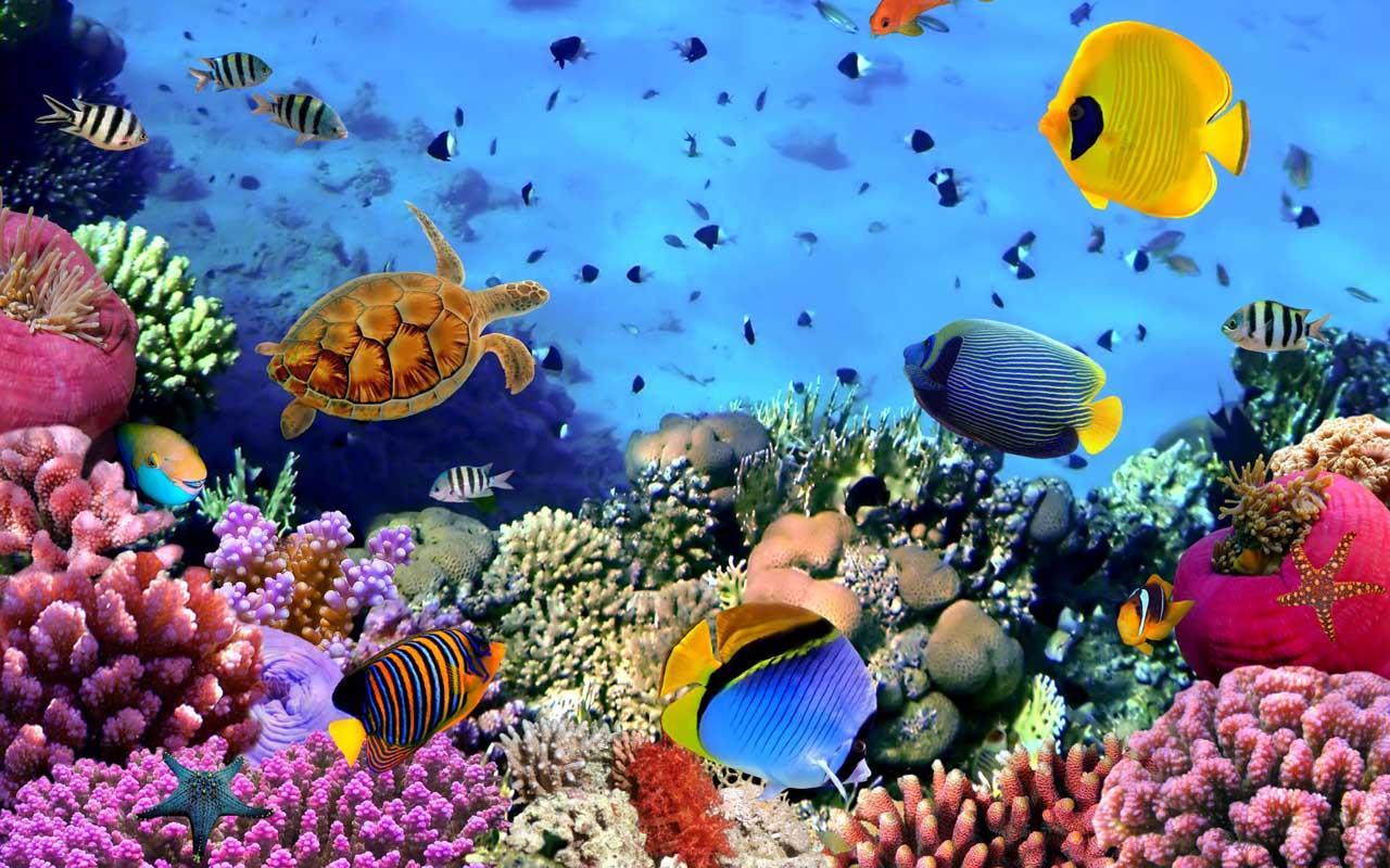 3d Underwater Wallpaper Best Wallpapers Hd Collection