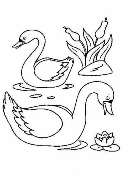 Dibujos de cisnes for Imagenes de estanques para ninos