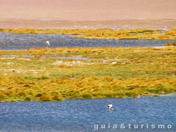 Vegas de Quepiaco - Flamingos