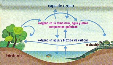 elementos basicos