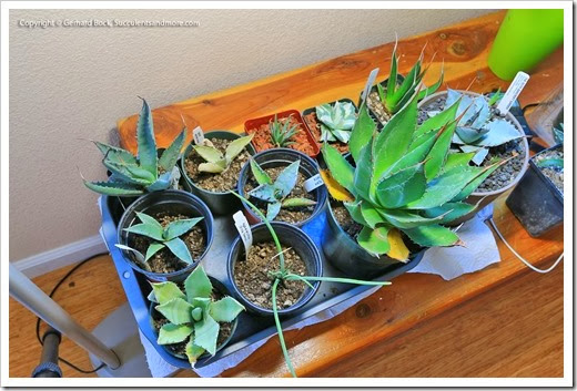 140113_indoor_plants_005