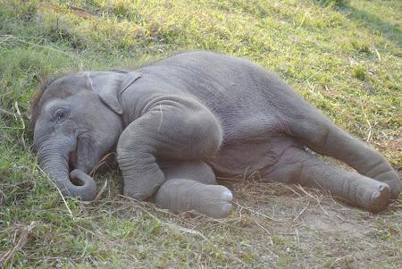 Elefantel jucaus