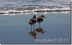 2011-10-17 Myrtle Beach 007