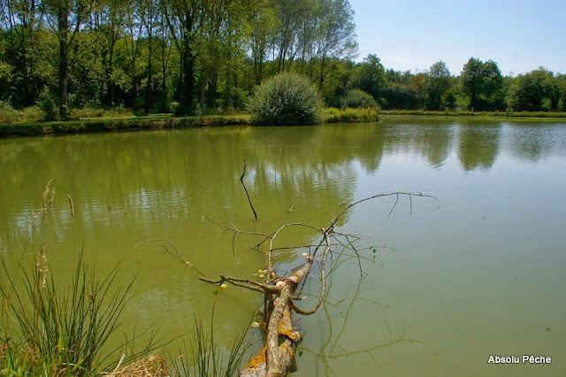 LITTLE FISH LAND photo #1482