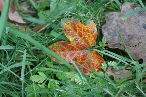 20081009 (5) (Small)