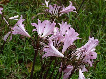 Flora Madeira