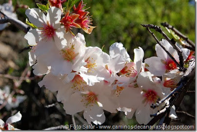 7452 La Goleta-La Candelilla(Flor Almendro)