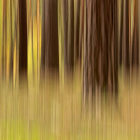 Wood abstract  by Markus Busch - Abstract Light Painting