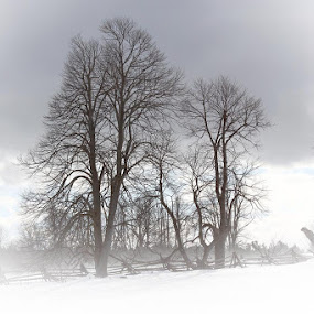 Blustery Day by Guy Longtin - Landscapes Weather ( winter, drifting, windy, snow, white )