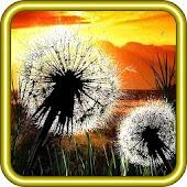 Dandelion Sunset LiveWallpaper