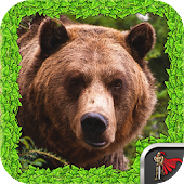 Animal Survival - Bear
