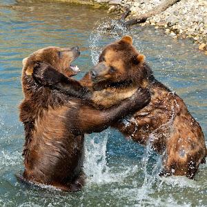 Bären.jpg