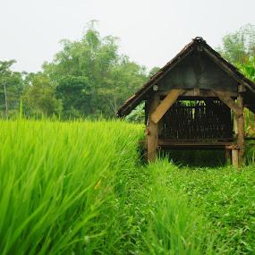 gubuk by Christian Nugroho - Nature Up Close Gardens & Produce