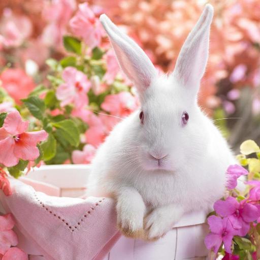 【免費個人化App】الأرانب لايف للجدران-APP點子
