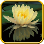 Water Lilies Live Wallpaper