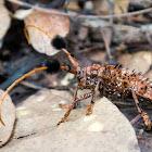 Long-horn beetle