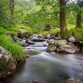 Mountain River by Vaidotas Maneikis - Landscapes Waterscapes ( wicklow, mountain, ireland, glendalough, longexposure, river, , renewal, green, trees, forests, nature, natural, scenic, relaxing, meditation, the mood factory, mood, emotions, jade, revive, inspirational, earthly, relax, tranquil, tranquility )