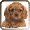 Pet Sitter: The Pet Manager icon