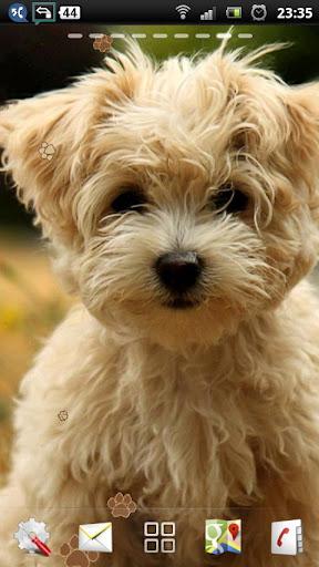 かわいい子犬 LWP