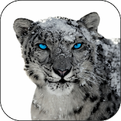 Snow Leopard Video Wallpapers